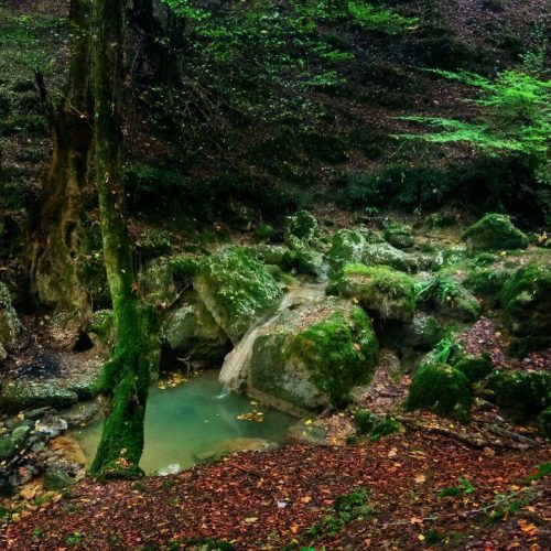 Caspian-Hyrcanian-mixed-forests-IranTour-Iran-Nature-ZhinoPars